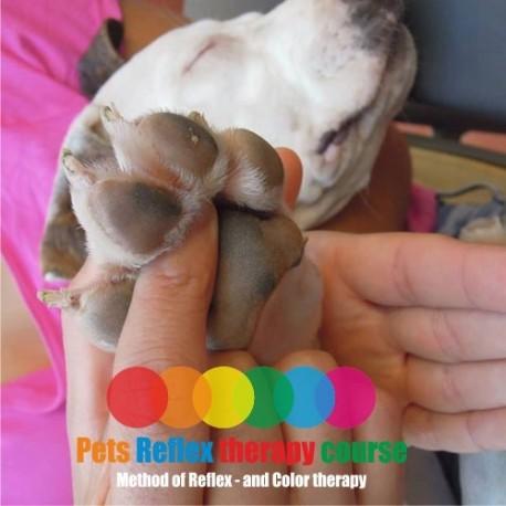 Curso Reflexologia para mascotas (Danes) Modulo2
