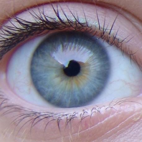Curso de Terapia Ocular (descarga español)