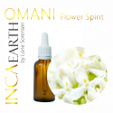 Omani Jasmine Essential Oil, 10ml