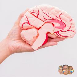 Reflexología para nervios craneales