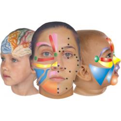 Facial Reflexology, Aarhus. Aug. 20