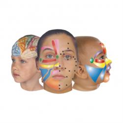 Ansigtszone-og Refleksterapi Online