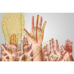 Neuro Hand DK LIVE