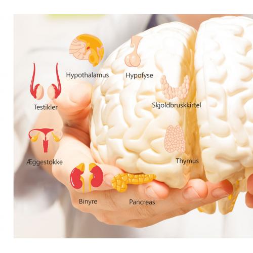 Curso Hormonal/Infertilidad Distancia (español)
