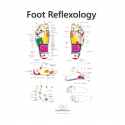Pack of ENGLISH CHATRS TCM Foot Reflexology 3 charts